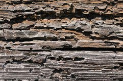 текстурированная древесина Стоковое Изображение