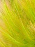 текстурированное естественное травы предпосылки флористическое Стоковые Изображения RF