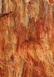 Текстурированное красочное окаменелое дерево как предпосылка Стоковая Фотография