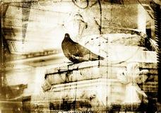текстурированное grunge dove граници Стоковые Изображения RF