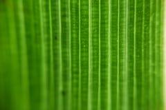 Текстурированные лист Стоковая Фотография RF