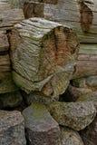 Текстурированные кольца дерева Стоковое Изображение RF