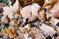текстурированные листья упаденные предпосылкой Стоковые Фотографии RF