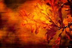 Текстурированные листья Стоковое Изображение RF