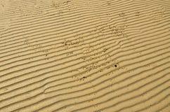 Текстурированные песок и рак-отверстия Стоковые Фото