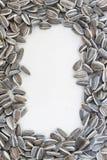 Текстурированные семена подсолнуха рамки Стоковое Изображение RF