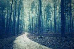 Текстурированный ландшафт леса grunge с дорогой Стоковое фото RF