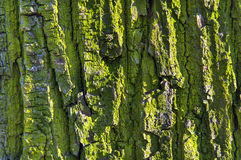 Текстурированный зеленый цвет дерева расшивы старый Стоковое фото RF