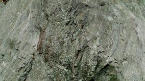 Текстурированный и зеленый шифер Больдэр стоковые фотографии rf