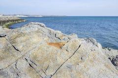 Текстурированный камень на пляже Стоковое Фото