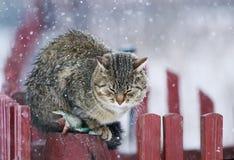 Текстурированный портретом striped кот улицы сидит на деревянном dur загородки Стоковые Изображения