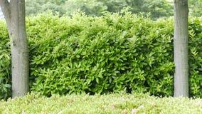 Текстурированный план рамки зеленых растений Стоковая Фотография