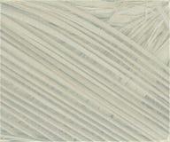 текстурированный свет листьев рамки кокоса предпосылки серый Стоковая Фотография