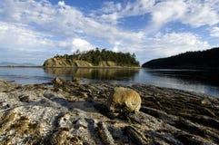 Текстурированный скалистый берег Стоковые Фотографии RF