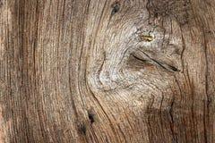 Текстурированный узел на древесине дуба Стоковые Фотографии RF
