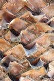Текстурированный хобот пальмы Стоковое Изображение RF
