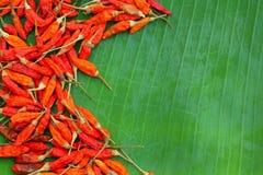 Текстурированный Chili Стоковые Изображения RF