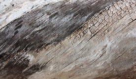 Текстурированный Driftwood Стоковое Изображение
