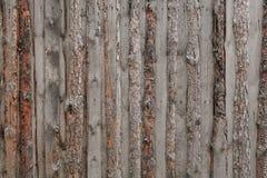 текстурирует древесину Стоковая Фотография
