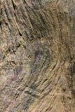Текстурируйте деревянную естественную деревянную поверхность, идеальную для предпосылок и текстур Стоковое Фото