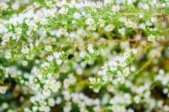 Текстурируйте предпосылку зеленых листьев и белых цветков Стоковое фото RF