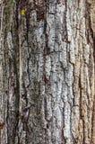 Текстурируйте съемку коричневой коры дерева, заполняя рамку Стоковая Фотография