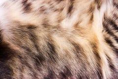 Текстурируйте striped мех кота, шерсть близко вверх Стоковые Изображения RF
