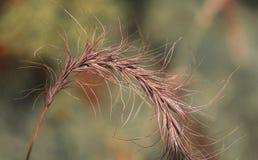 Текстурная природа Стоковое Изображение