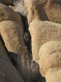 Текстурный крупный план грубых утесов гранита пустыни и чувствительного сравнивать засаживает сверкать в солнце позднего вечера Стоковые Фото