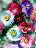 Текстуры ветви цветения полевых цветков астры предпосылки конспекта искусства акварели мытье флористической влажное запачкало фан Стоковое Изображение RF