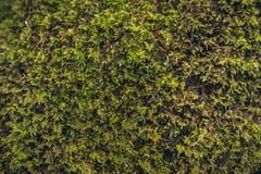 Текстуры леса Стоковые Изображения