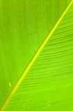 Текстуры зеленых лист ладони Стоковые Изображения