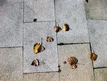 Текстуры плитки Стоковое Фото