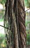 Текстуры Таиланда 6 Стоковые Изображения