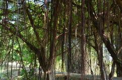 Текстуры Таиланда 6 Стоковая Фотография RF