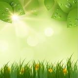 текст весны космоса природы предпосылки ваш желтый цвет обоев вектора уравновешивания rac померанцовой картины цветков eps10 выст Стоковые Изображения