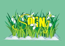 текст весны snowdrops предпосылки Стоковая Фотография