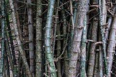 Текст гравируя к бамбуку Стоковая Фотография