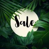 Текст продажи с предпосылкой джунглей реальных листьев тропической Стоковая Фотография RF