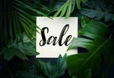 Текст продажи с предпосылкой джунглей реальных листьев тропической Стоковые Фото