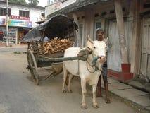 Тележка вола в Шри-Ланка стоковое фото rf
