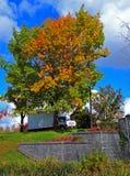 тележка листьев осени стоковое фото