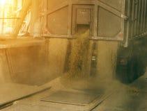 Тележка разгржает зерно на хранение зерна и завод по обработке, объект хранения зерна, разгржая зерно, объект стоковая фотография rf