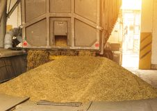 Тележка разгржает зерно на хранение зерна и завод по обработке, объект хранения зерна, разгржая мозоль, солнце стоковое изображение