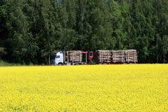 тележка rapeseed поля внося в журнал Стоковое Изображение