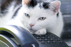 телефон кота Стоковое Изображение