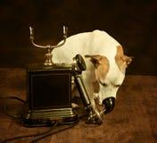 телефон собаки Стоковое Фото