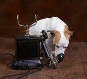 телефон собаки Стоковое Изображение RF