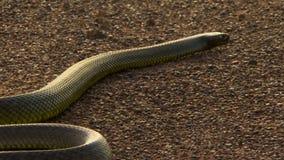 Тело и кабель змейки slither прочь сток-видео