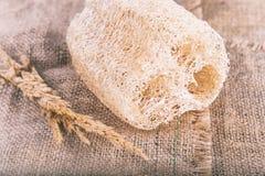 Тело люфы естественное Scrub Стоковое фото RF